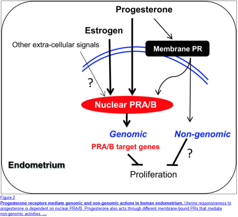 how to raise progesterone levels